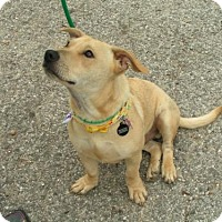 Adopt A Pet :: Beau-Beau  (See Video) - Munford, TN