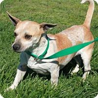 Adopt A Pet :: Queenie - Salem, NH