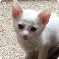 Adopt A Pet :: Burt - Ortonville, MI