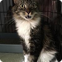 Adopt A Pet :: Patches - Melbourne, FL