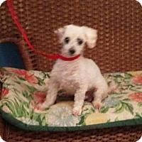 Adopt A Pet :: (Pink) Floyd - Tulsa, OK