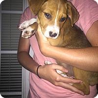 Adopt A Pet :: Wesson - Glastonbury, CT