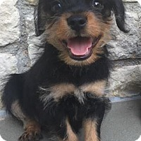 Adopt A Pet :: Newman - Houston, TX