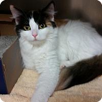 Adopt A Pet :: Meme - Chippewa Falls, WI