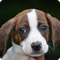 Adopt A Pet :: Summer - Doylestown, PA