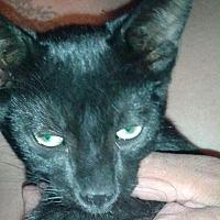 Adopt A Pet :: Ludo - Santa Monica, CA
