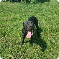 Adopt A Pet :: TinTin - Moberly, MO