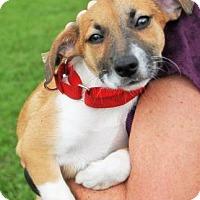 Adopt A Pet :: MAZDA - Fernandina Beach, FL
