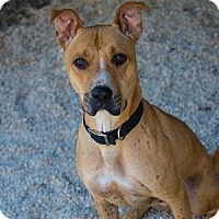 Adopt A Pet :: BENZ - Decatur, GA