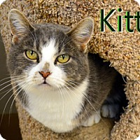 Adopt A Pet :: Kitty - Hamilton, MT