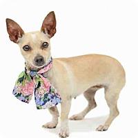 Adopt A Pet :: MUNECA - Orlando, FL