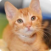 Adopt A Pet :: Bobby - Vancouver, WA