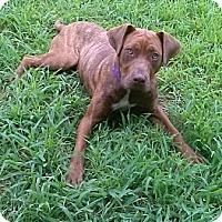 Adopt A Pet :: Truffles - Acushnet, MA