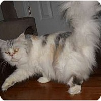 Adopt A Pet :: Stormie - McDonough, GA