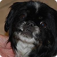 Adopt A Pet :: Sacajawea - Ogden, UT