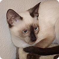 Adopt A Pet :: Pi - Scottsdale, AZ