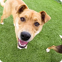 Adopt A Pet :: Hooch - Meridian, ID
