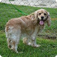 Adopt A Pet :: Higgins - Alpharetta, GA