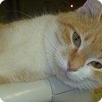 Adopt A Pet :: Hope - Hamburg, NY