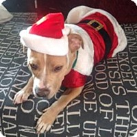 Adopt A Pet :: Nick (aka Bubba) - Sacramento, CA