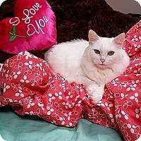 Adopt A Pet :: Baby - Monroe, GA