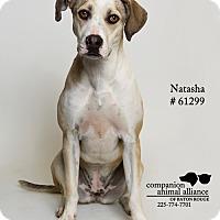 Adopt A Pet :: Natasha - Baton Rouge, LA