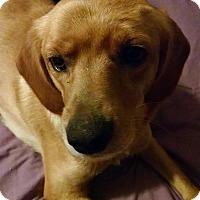 Adopt A Pet :: Suzy - Georgetown, KY