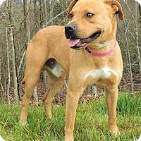 Adopt A Pet :: Allen - Lincolnton, NC