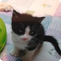 Adopt A Pet :: Cb litter - Camrick - ADOPTED - Livonia, MI