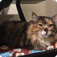 Adopt A Pet :: Consuela - Bellevue, WA