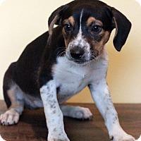 Adopt A Pet :: Padme - Waldorf, MD