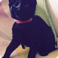 Adopt A Pet :: Mirelle - Addison, IL