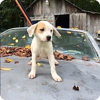 Adopt A Pet :: Jasper - Hohenwald, TN