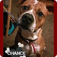 Adopt A Pet :: Chance - Des Moines, IA