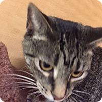 Adopt A Pet :: Lori - Livonia, MI