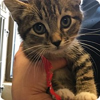Adopt A Pet :: Pari - Duluth, MN