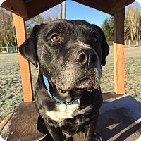 Adopt A Pet :: Pote, happy & handsome boy - Snohomish, WA