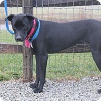 Adopt A Pet :: Kasie - Aurora, IL