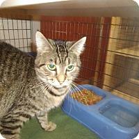 Adopt A Pet :: Mallory - Muscatine, IA