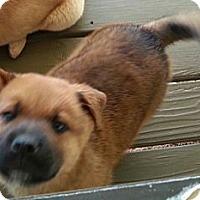 Adopt A Pet :: Chubbs - Vista, CA