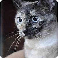 Adopt A Pet :: Jasmine - Columbus, OH