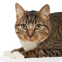 Adopt A Pet :: Bernie - Santa Monica, CA