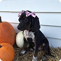 Adopt A Pet :: Pink Girl - Zanesville, OH