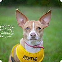 Adopt A Pet :: Little Momma - Fort Valley, GA