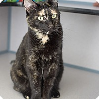 Adopt A Pet :: Aurora - Fort Collins, CO