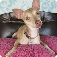 Adopt A Pet :: Layla - San Diego, CA