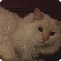 Adopt A Pet :: Wencelas - Ennis, TX