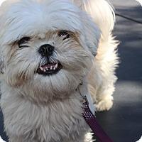 Adopt A Pet :: Bijoux - Los Angeles, CA