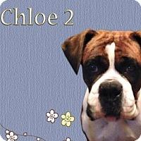 Adopt A Pet :: Chloe 2 - Woodinville, WA