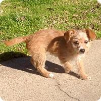 Adopt A Pet :: Jonesy in Texarkana Texas - Texarkana, TX